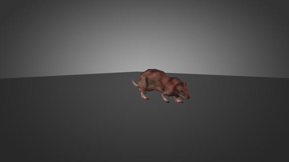 HL1 Rat