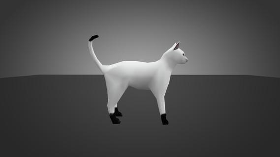 White Cat for Chicken